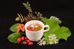 Decozione medicinale Immagine Stock