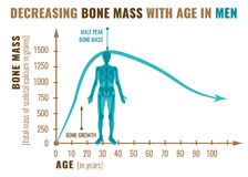 Decreasing bone mass. With age in men. Detailed infographic in beige, brown and blue colors isolated on a white background. Vector illustration. Healthcare and vector illustration