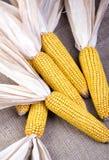 Decroative Corn on Burlap Royalty Free Stock Image