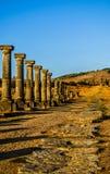 Decumanus Maximus, Gordian Palace, Tingis-Poort, Volubilis Stock Foto's