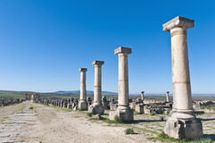 Decumanus Maximus street at Volubilis, Morocoo Royalty Free Stock Photography