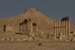 Decumenus Maximus of Palmyra. Syria Royalty Free Stock Photography