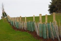 Dedge piantato Fotografia Stock