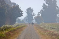 Cycling in Poor Conditions. A dedicated cycling team ignore the poor air quality caused by local fires in the area and cycle on a rural road stock images