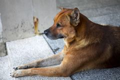 The dog of the guardian door stock image