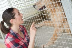 Dedicated girl training dog in kennel royalty free stock images