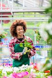 Dedicated woman holding a potted plant during work as florist royalty free stock photo