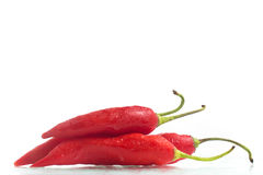 Dedo de Moca Chilly Pepper Royalty Free Stock Photography