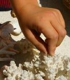 Dedos del niño que tocan corales Foto de archivo libre de regalías