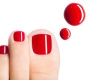 Dedos del pie femeninos hermosos con pedicura y descensos rojos del esmalte de uñas Fotos de archivo