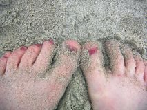 Dedos do pé de Sandy Fotografia de Stock