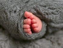 Dedos do pé pequenos de um infante, close up Foto de Stock