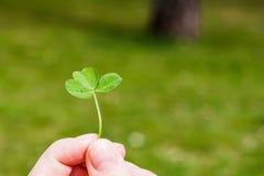 Dedos fêmeas com o trevo de três folhas Foto de Stock