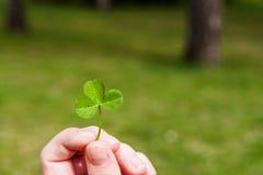 Dedos fêmeas com o trevo de três folhas Fotografia de Stock Royalty Free