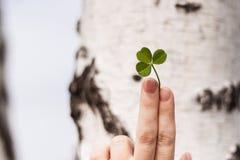 Dedos fêmeas com o trevo de três folhas Imagem de Stock Royalty Free