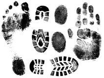 Dedos y pies ilustración del vector