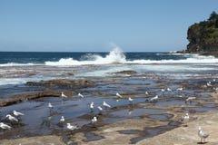 Dee почему пляж Австралия Стоковое Фото