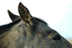 Deel 1 van het paard stock foto