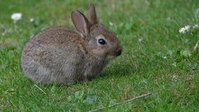 Deel het gekweekte konijn voeden in stedelijke huistuin stock footage