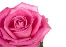 Deel van de close-up van mooie roze nam toe Royalty-vrije Stock Fotografie
