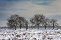 Deelerwoud no inverno Fotografia de Stock Royalty Free