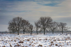 Deelerwoud in Winter Royalty Free Stock Photography