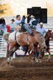 Deelnemer bij de rodeo Willits Royalty-vrije Stock Afbeeldingen