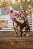 Deelnemer bij de rodeo Willits Stock Afbeelding