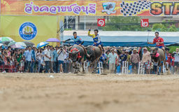 Deelnemersbuffels het rennen festivallooppas Royalty-vrije Stock Fotografie