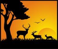 Deen In Forest-silhouet Stock Afbeeldingen