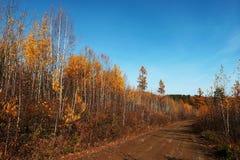 Deep autumn Stock Photography