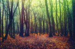 Deep into the fogy forest. Deep into the autumn fogy forest royalty free stock photos