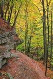 Deep Autumn Forest Stock Photos