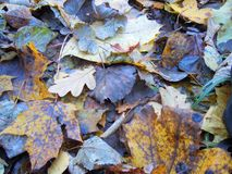 Deep autumn leaves on the ground. Autumn leaves on the ground Stock Images