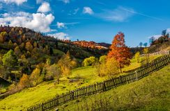 Deep autumn sunny day in mountainous rural are. Beautiful orange foliage of a tree on a grassy meadow behind the fence. gorgeous weather with few clouds on a Stock Images