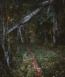 Deep into the autumn woods. Deep into the dark autumn woods royalty free stock images