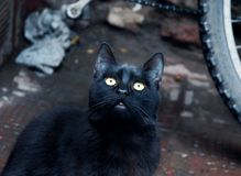 Deep black cat in Morocco Stock Images