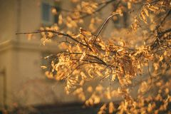 Autumn leaves on the sun. stock photo