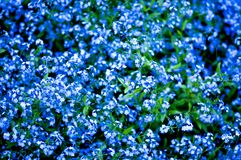 Deep blue flowers stock images