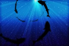 Deep Blue Sea. Underwater view from the depth of an ocean as you see the sharks hovering on top of you Royalty Free Stock Photography