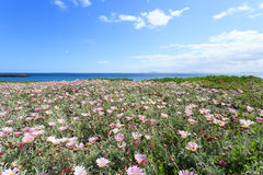Deep blue sea and beautiful flowers in Cape Town Royalty Free Stock Photo