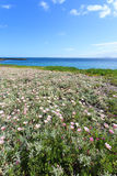 Deep blue sea and beautiful flowers on the coastline Stock Images