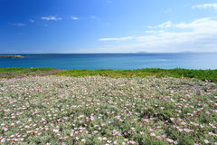 Deep blue sea and beautiful flowers in South Africa Stock Images