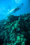 Deep blue sea scuba diving diver kapoposang indonesia Stock Photos