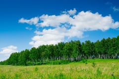 Deep blue sky over birch forest and meadow Stock Images