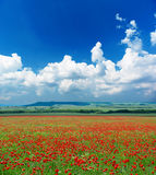 Deep blue sky and poppy meadow Royalty Free Stock Image