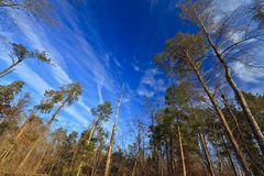 Deep blue sky, stratus clouds and and trees Royalty Free Stock Photos