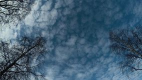 Deep blue sky with white clouds moving in the background with tall birch trees. In the front, timelapse video stock footage