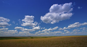 Deep blue sky and white cumulus clouds. Over summer field Royalty Free Stock Image