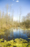 Deep bog in a thicket. Royalty Free Stock Photo